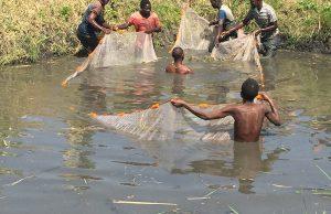 aquaculture Zambia